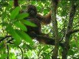 France5_Les fous volants de la jungle_1/3_Dim 02 avril 2011