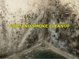The Best Mold Cleanup Utah Companies