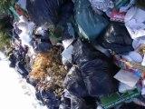 Isola delle Femmine la Munnezza 14 aprile 2011