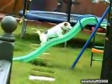 Un ptit chien bien déterminé à monter sur un toboggan ou pas