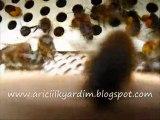 Video polen
