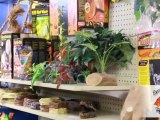 Pet Store Fergus St Clements Exotic Wings & Pet Things