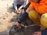 Fouilles archéologiques sur la plage d'Urville