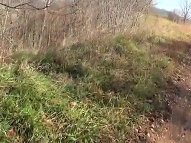 British Beagle www.avyaban.com – ergo
