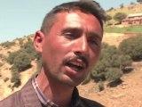 Los bosques de cedros de Marruecos en peligro por talas ilegales