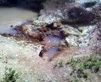 Geyser de la vallée des geysers