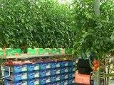 Les maraîchers inquiets pour la récolte 2011