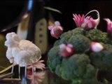 Michel Sidobre : Sculptures sur fruits et légumes
