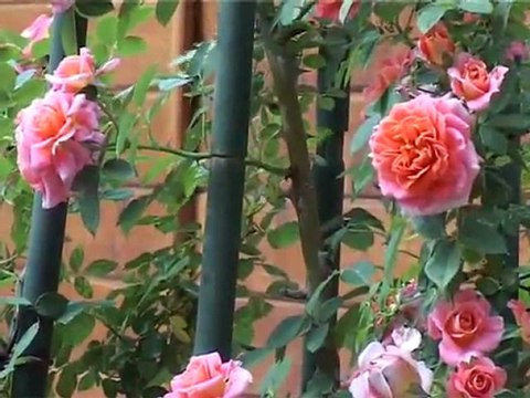 Valsainte, l'abbaye des rose