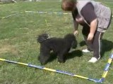 Dandy entraînement cavage le 16 mai 2011