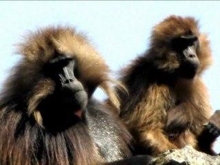 Etiopia 2011 - Simien Mountains