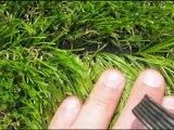 Gazon-Synthetique-James-Grass