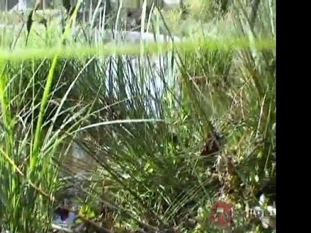 L'écosystème de la mare - TV Nature épisode 14