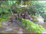 RDC JUNGLE