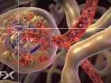 How diabetic nephropathy works