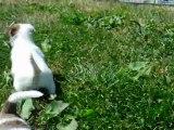 femelle fauve blanc jexel