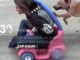 Sommaire emission 30 Millions d'Amis 28 05 2011