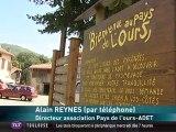 Un lâcher d'ours fait polémique dans les Pyrénées