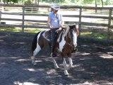 RANCH Equitation americaine .dressage et education en selle western sans prise des rênes à TINKAPALO RANCH