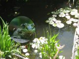 le monde merveilleux et féerique des bassins