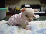 bébé chien trop mimi !