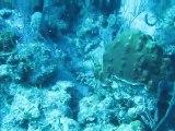 Plongée aux Bahamas au large de Nassau - avril 2011-2
