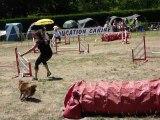 Domino - STGR Ville sous Anjou - 2eme jour jumping
