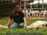 totale soumision des animaux au nom de dieuu