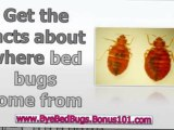 how to treat bed bugs - bed bugs removal - bed bugs treatment at home