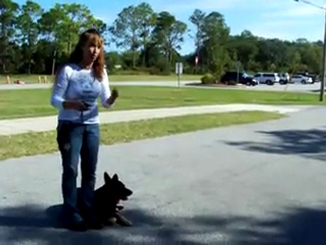 "YouTube – Dog Training Teaching ""kennel"" W- Dogtra E-collar-Pager Collar"