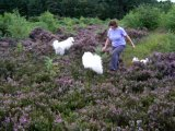 The Fluffters in Heather