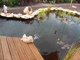 vidéo de mon bassin 002