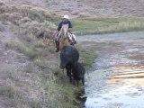 Une vache et son veau dans une mare vaseuse
