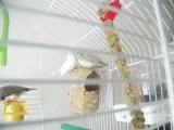 Bébés mandarins venant de sortir du nid