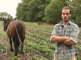 La traction animale, une technique d'autrefois (Vendée)