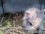 3 BB lapins nains portée 2