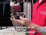 Carpet Cleaning North Salt Lake - Is the Carpet Safe