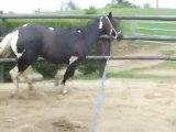 Donna jument paint horse