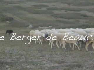 Le Berger de Beauce chien de travail au troupeau