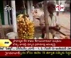 Tirayatra - God Siva temple - Palivela @ East godavari dist - part 01