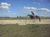 Poney-club. Les chevaux. Sauts 2B). 25/06/2011. SDC10641
