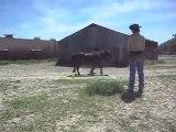 Poney-club, travail de présentation de poneys et chevaux en main. 2) 26/06/2011.SDC10711