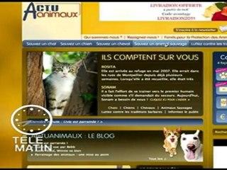 Actuanimaux.com à Télématin - 01/07/2011 - 2/2