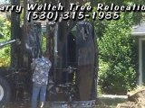 Larry Weltch Tree Relocation Expert-We Have the Equipment to Plant the Big Trees