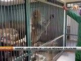 Maroc: Les lions de l'Atlas règnent à nouveau