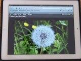 Uploading photos on a wordpress blog