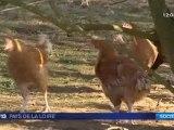 Sarthe : les poulets de Loué sans OGM