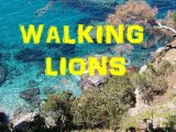 walking lion NATUREZA reggae ecologico