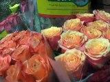ETHAN FLEURS, fleuriste paris 11 Fbg St Antoine ou Bastille