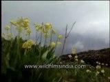Wild flowers-MPEG-4 800Kbps